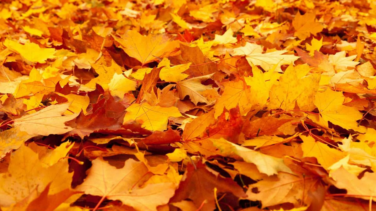 Prepare your Roof for Fall